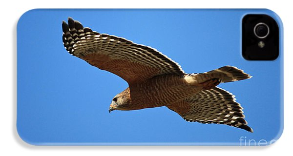 Red Shouldered Hawk In Flight IPhone 4s Case by Carol Groenen
