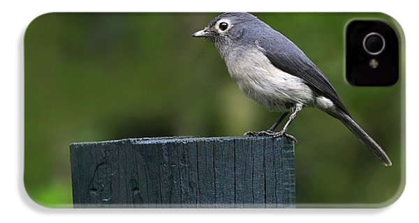 White-eyed Slaty Flycatcher IPhone 4s Case by Tony Beck