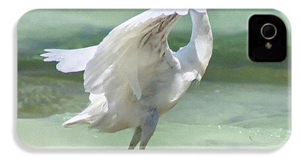 A Snowy Egret (egretta Thula) At Mahoe IPhone 4s Case