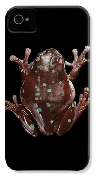 Australian Green Tree Frog, Or Litoria Caerulea Isolated Black Background IPhone 4s Case by Sergey Taran