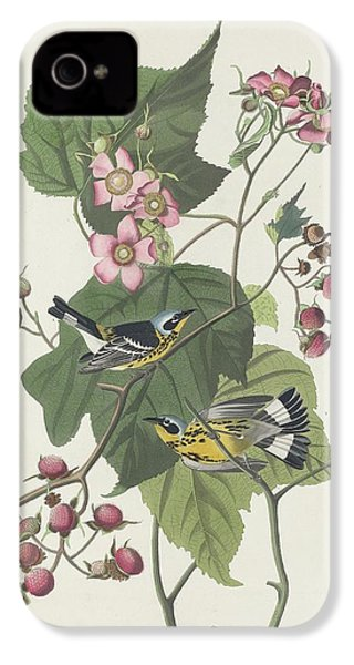 Black And Yellow Warbler IPhone 4s Case by Dreyer Wildlife Print Collections