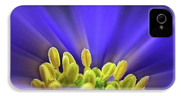 blue Shades - An Anemone Blanda IPhone 4s Case by John Edwards