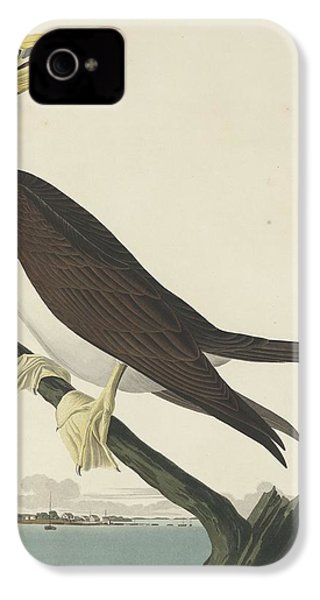 Booby Gannet IPhone 4s Case by Dreyer Wildlife Print Collections