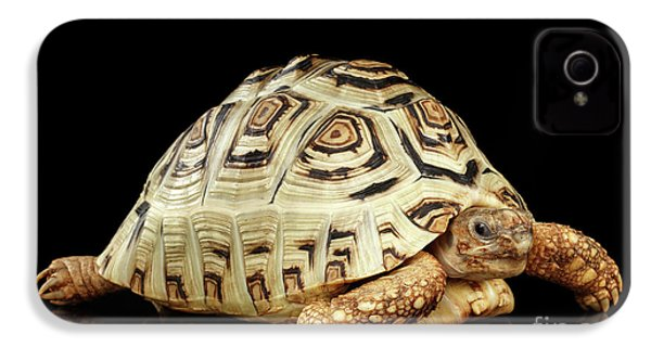 Closeup Leopard Tortoise Albino,stigmochelys Pardalis Turtle With White Shell On Isolated Black Back IPhone 4s Case by Sergey Taran