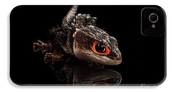 Closeup Red-eyed Crocodile Skink, Tribolonotus Gracilis, Isolated On Black Background IPhone 4s Case by Sergey Taran
