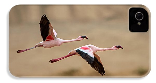 Greater Flamingos Phoenicopterus Roseus IPhone 4s Case by Panoramic Images