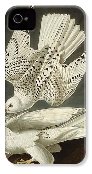 Iceland Or Jer Falcon IPhone 4s Case by Dreyer Wildlife Print Collections