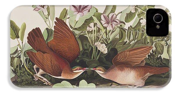Key West Dove IPhone 4s Case by John James Audubon