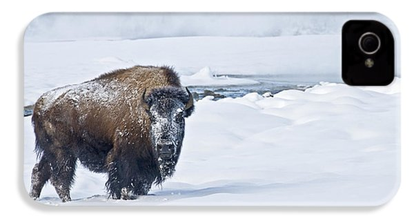 Lone Bison IPhone 4s Case by Gary Lengyel