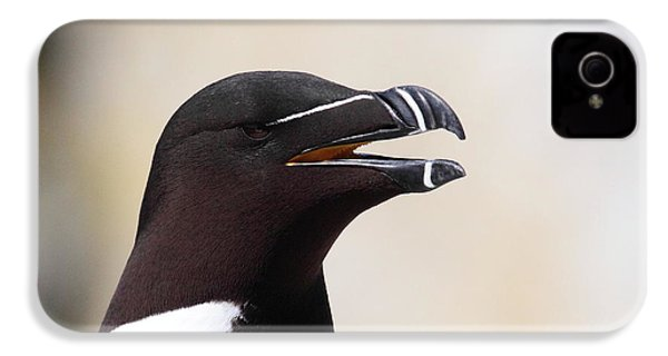Razorbill Portrait IPhone 4s Case by Bruce J Robinson