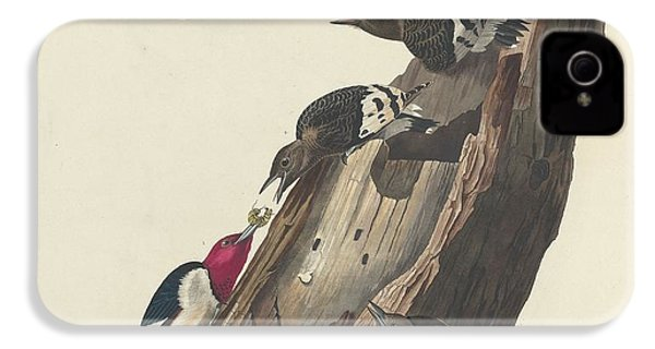 Red-headed Woodpecker IPhone 4s Case by Dreyer Wildlife Print Collections