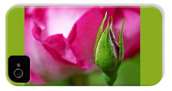 Budding Rose IPhone 4s Case by Rona Black