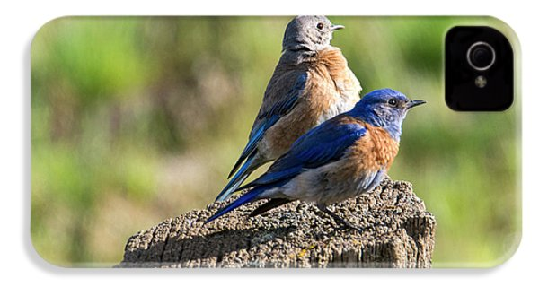 Western Bluebird Pair IPhone 4s Case by Mike Dawson