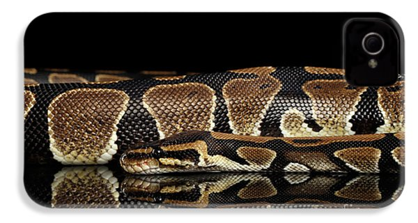 Ball Or Royal Python Snake On Isolated Black Background IPhone 4s Case by Sergey Taran