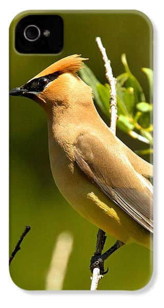 Cedar Waxwing Closeup IPhone 4s Case by Adam Jewell