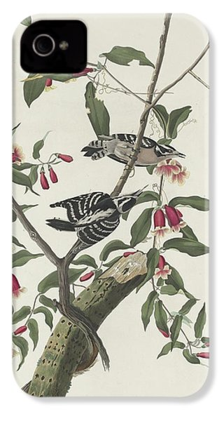 Downy Woodpecker IPhone 4s Case by Dreyer Wildlife Print Collections