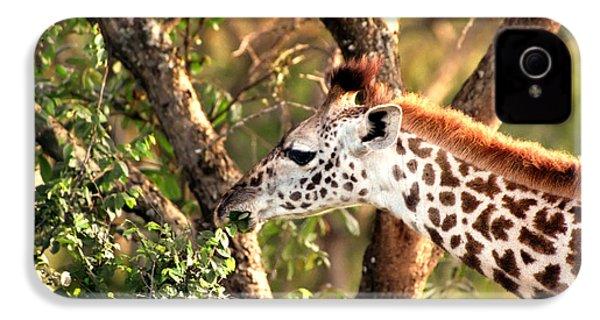Giraffe IPhone 4s Case by Sebastian Musial