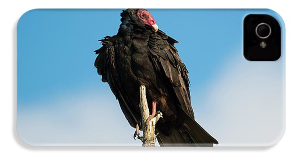 Looking For A Meal IPhone 4s Case by Mike Dawson