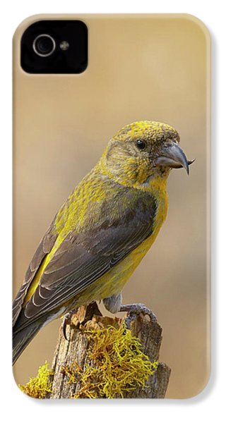 Red Crossbill IPhone 4s Case by Doug Herr