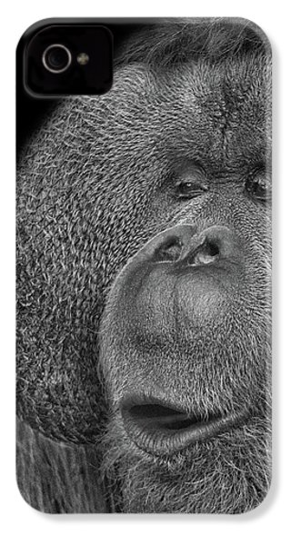 Orangutan IPhone 4s Case