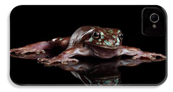 Australian Green Tree Frog, Or Litoria Caerulea Isolated Black Background IPhone 4s Case by Sergey Taran