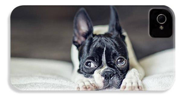 Boston Terrier Puppy IPhone 4s Case by Nailia Schwarz