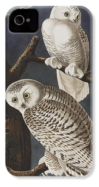 Snowy Owl IPhone 4s Case by John James Audubon