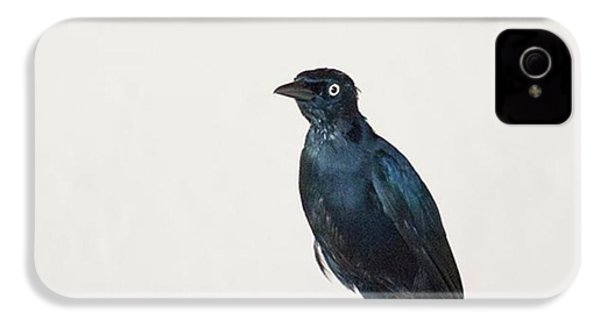 A Carib Grackle (quiscalus Lugubris) On IPhone 4s Case by John Edwards