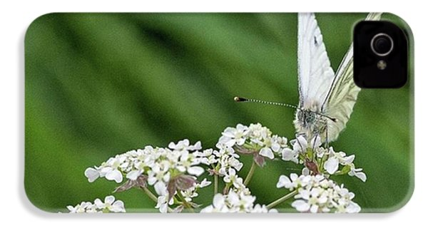 A Green-veined White (pieris Napi) IPhone 4s Case by John Edwards