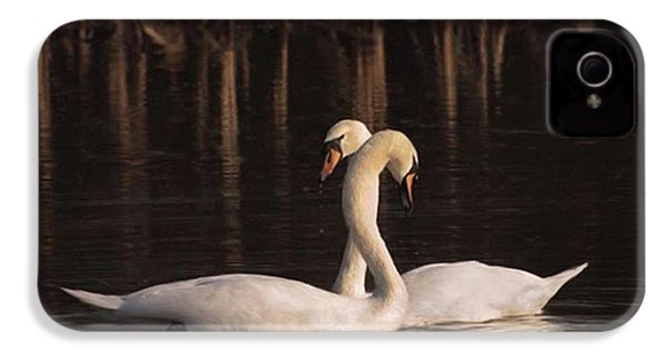 A Painting Of A Pair Of Mute Swans IPhone 4s Case by John Edwards