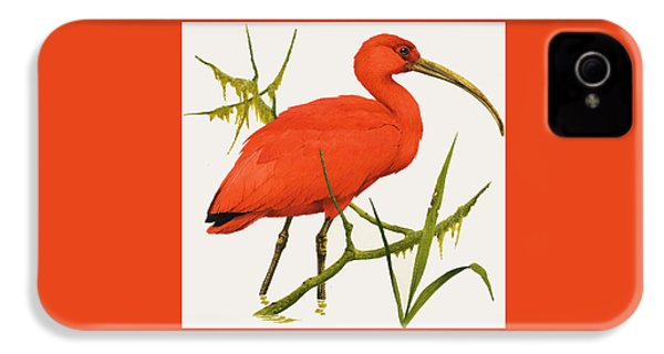 A Scarlet Ibis From South America IPhone 4s Case by Kenneth Lilly