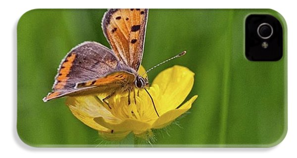 A Small Copper Butterfly (lycaena IPhone 4s Case by John Edwards