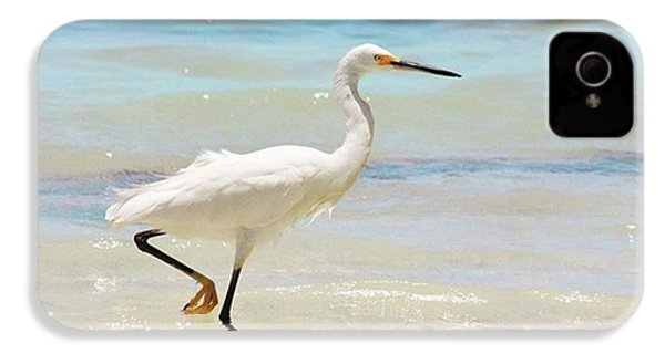 A Snowy Egret (egretta Thula) At Mahoe IPhone 4s Case by John Edwards