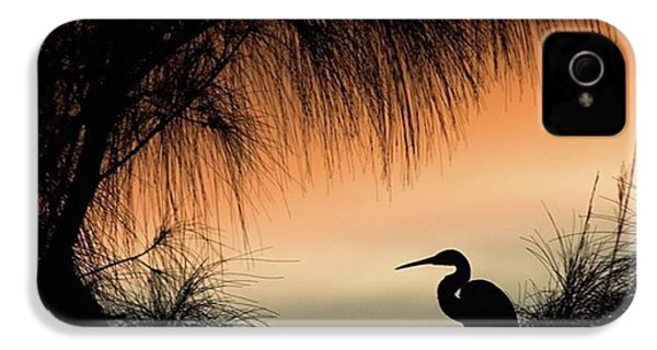 A Snowy Egret (egretta Thula) Settling IPhone 4s Case by John Edwards