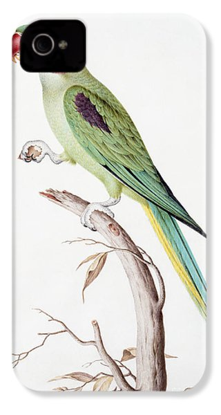 Alexandrine Parakeet IPhone 4s Case by Nicolas Robert