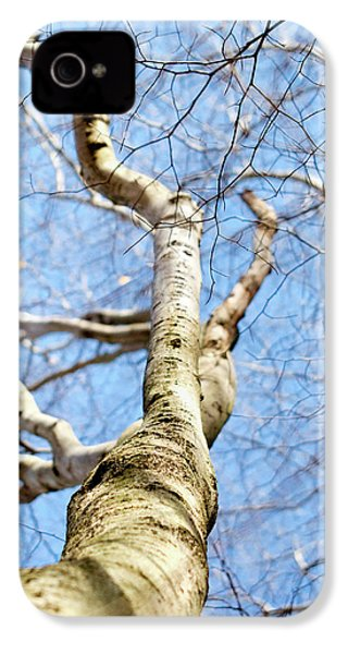 American Beech Tree IPhone 4s Case by Christina Rollo