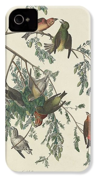 American Crossbill IPhone 4s Case by Rob Dreyer