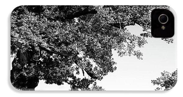 Ancient Oak, Bradgate Park IPhone 4s Case by John Edwards