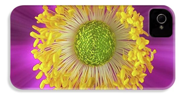 Anemone Hupehensis 'hadspen IPhone 4s Case by John Edwards