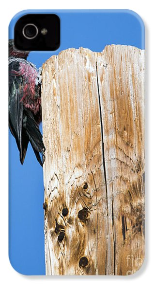 Any Tree Will Do IPhone 4s Case by Mike Dawson