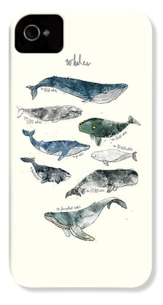 Whales IPhone 4s Case by Amy Hamilton