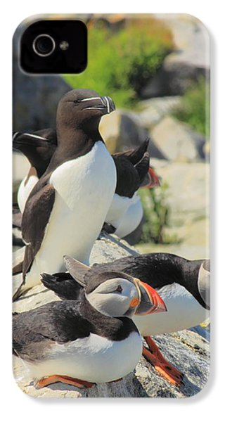 Atlantic Puffins And Razorbill IPhone 4s Case by John Burk