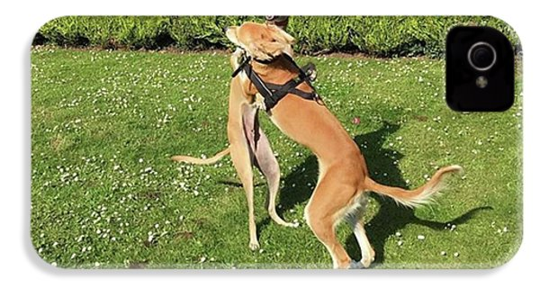 Ava The Saluki And Finly The Lurcher IPhone 4s Case