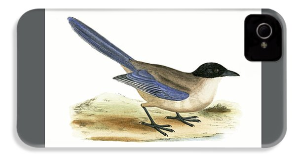 Azure Winged Magpie IPhone 4s Case by English School