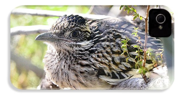 Baby Roadrunner  IPhone 4s Case by Saija Lehtonen