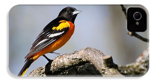 Baltimore Oriole IPhone 4s Case by Christina Rollo