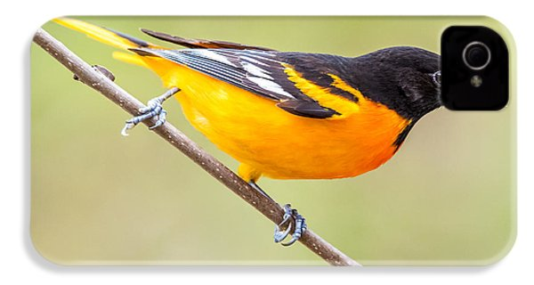 Baltimore Oriole IPhone 4s Case by Paul Freidlund