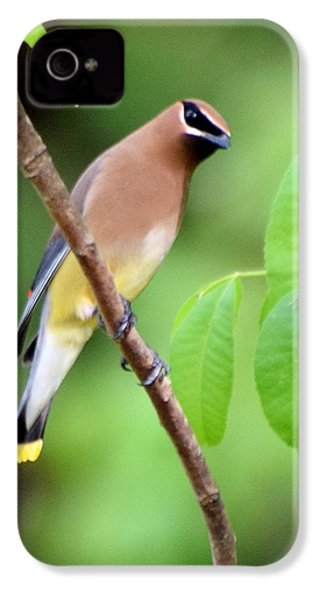 Beautiful Cedar Wax Wing  IPhone 4s Case by Sheri McLeroy
