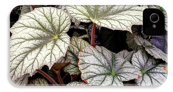 Big Begonia Leaves IPhone 4s Case by Nareeta Martin
