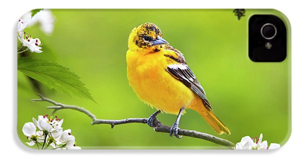 Bird And Blooms - Baltimore Oriole IPhone 4s Case by Christina Rollo